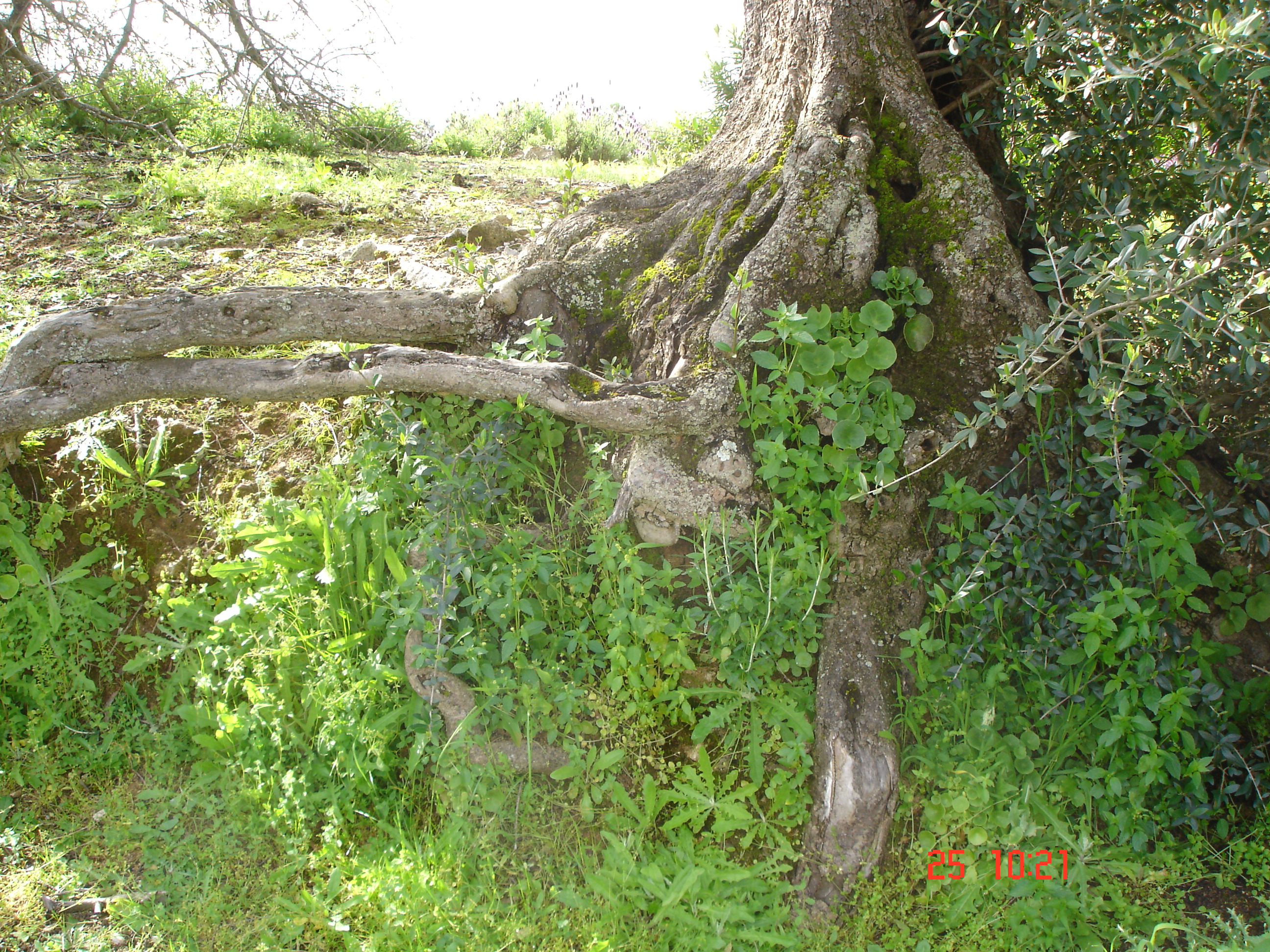 raíces | El bosque silencioso